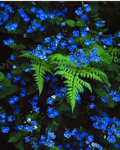 Pops of blue and bright green color emerging from the shadows highlight the differences in plant texture, size, and color.