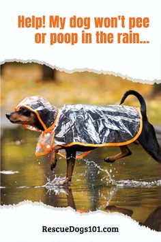 Help! My dog won't pee or poop in the rain... Tips and tricks for taking your dog out in the rain, even if he refuses or is afraid of the rain. Puppy Potty Training Tips, Go Outside, Puppies, Dogs, Cubs, Pet Dogs, Doggies, Pup, Newborn Puppies