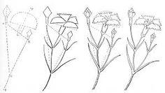 Afbeeldingsresultaat voor tulpen rozen en andere mooie bloemen tekenen