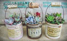 1 million+ Stunning Free Images to Use Anywhere Succulent Gifts, Succulent Gardening, Planting Succulents, Container Gardening, Recycled Tin Cans, Recycled Crafts, Tin Can Crafts, Diy And Crafts, Vasos Vintage