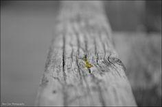 Railing, via Flickr. My photography. Photography Photos