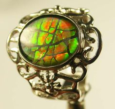 briAmmolite is a rare and valuable opal-like organic gemstone found primarily along the eastern slopes of the Rocky Mountains of the United States and Canada. It is made of the fossilized shells of ammonites, which in turn are composed primarily of aragonite, the same mineral that makes up nacreous pearlsght ammolite ring 5.5 size24 cts [sj883