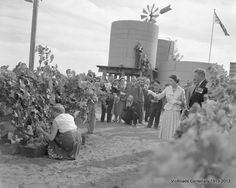 Royal tour -Queen Elizabeth and Prince Phillip in Councillor Barclay's vineyard. Red Cliffs. Mildura 1954. From our archives. VicRoads Centenary 1913 - 2013.