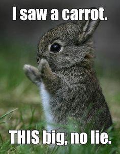 Rabbit Finds a Carrot