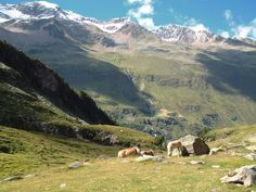 Horses at the entrance to theRotmoostal valley, Obergurgl, Austria.
