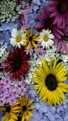 Horticultural Art - Flowers - photographer Fred Michel