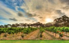 Australian Vineyards with food as good as their wine: Western Australia