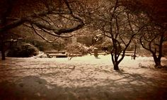What I call 'The Secret Garden' in Trinity College Dublin! It's actually not very secret but I was on my own in the snow when I took the photo!