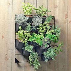 Eco friendly vertical wall garden