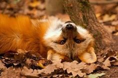 Fall lovin' fox