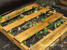 Raised Strawberry Bed Marilyn's Way!