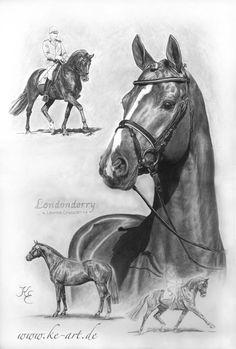 Hannoverian stallion Londonderry - Drawing by Katja Eichhorn