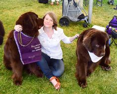 A kiss before the show: Photos from last Sunday's dog show in Wrentham