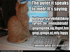 Funny Cat Pictures With Words | Category Archives: funny cat pictures