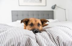 Before you begin picking your pup however, you need to consider your lifestyle. Ask yourself these questions: How active are you? What size home do you have? Can you afford a dog? Are you physically and mentally capable of caring for the dog?
