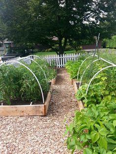 Love the pickett fence around my raised bed vegetable garden.