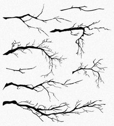 tree-reference-007.jpg 750×826 pixels