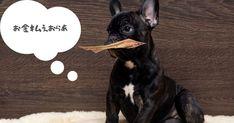 犬を飼うための費用は200万円です【最新版】 - いぬのみみ Dogs, Animals, Animais, Animales, Animaux, Pet Dogs, Doggies, Animal, Dog