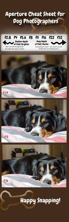 Learn about Aperture and how to change the depth of field to add that professional look to your dog photos. The helpful Aperture Cheat Sheet includes several real examples to illustrate the points in the tutorial.