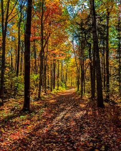 ***Forest path in autumn (New Brunswick) by aaron5153 cr.c.