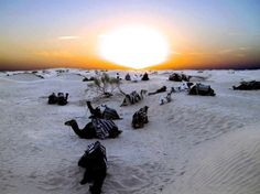 Le coucher de la caravane.Tunisie