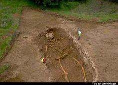 Un squelette de géant #Animaux #Etrange #Bizarre