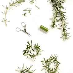 Add a mini rosemary wreath to your holiday cards!