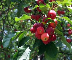 How to Organically Fertilize Fruit Trees