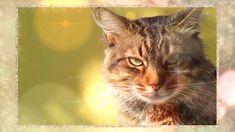Small Pet Supplies, Online Pet Supplies, Online Pet Store, Cat Love, Tote Handbags, Crates, Dog Cat, Store Supply, Pets