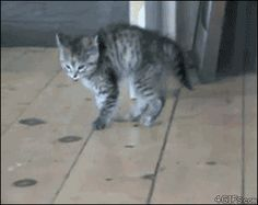 Nope.nope.nope.nope. | 27 Cats That Just Cant HandleIt