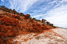 Red forest - Arazati beach, artistic red touch