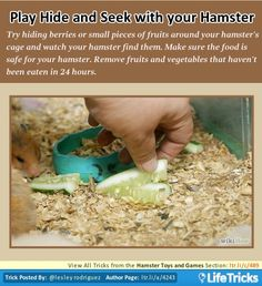 Hamster Toys and Games - Play Hide and Seek with your Hamster