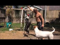 Viral videos of dog's hanging from trees/tugs - 4 Dogs and a Little Lady