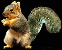The perfect Dance Squirrel Funny Animated GIF for your conversation. Discover and Share the best GIFs on Tenor. Funny Dancing Gif, Gif Dance, Funny Animal Pictures, Funny Animals, Cute Animals, Happy Birthday Squirrel, Dancing Clipart, Eastern Gray Squirrel, Secret Squirrel