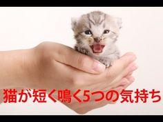 【衝撃】 猫が短く鳴く5つの気持ち
