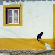 #StreetArt #cats