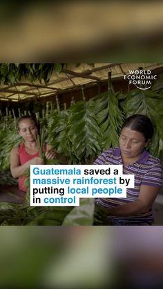 """World Economic Forum on Instagram: """"Keeping deforestation at bay. #environment #forests #deforestation #nature #southamerica"""" Rainforest Deforestation, World Economic Forum, Forests, Climate Change, South America, Environment, Nature, Instagram, Naturaleza"""