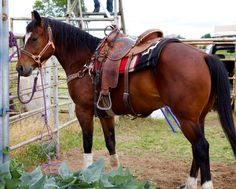 Goose #BenbrookStables #Horsesforsale AQHA 2007 Bay Gelding for Sale  $10,500 Finished working cow horse 817-249-1001