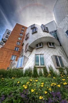STATA Center, MIT Campus #Frank Gehry