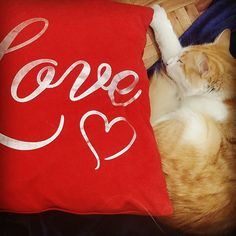 Cuddled up on my blanket next to my Love cushion. Paper Shopping Bag, Cuddling, Cushions, Kitty, Blanket, My Love, Bags, Instagram, Home Decor