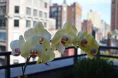 Orchids blooming on our suite's terrace.