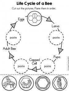 Life Cycle of a Bee Cut and Paste activity >> Part of the Insects No Prep Activities packet >> Includes life cycle worksheets for bees, ants, butterflies, and ladybugs.: The Bee Tree Bee Activities, Kindergarten Worksheets, Worksheets For Kids, Sequencing Activities, Printable Worksheets, Free Printables, Kindergarten Science, Teaching Science, Science For Kids
