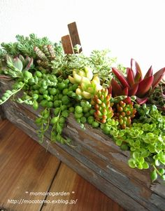 I enjoy the succulents and having plants in rustic containers.