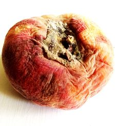 RESEARCH: The usual softness and roundness of the peach has been transformed by the decay to a wrinkled texture.