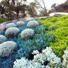 I've asked Nathan Burkett to let us know the plants he used in this garden.... But curious how many we can figure out on our own? Despite my usual meadow-y preferences, I adore this striking contemporary style coastal garden and color scheme. Do you lik