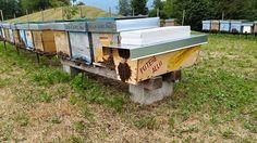 Potere allo Sciame.... il progetto della Scuola Ambulante per un'apicoltura Sostenibile