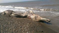 Mystery sea creature was said to look like a dinosaur but with a bird's beak and fur on its tail. But one expert appears to have revealed its true identity.