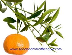 Mandarin (citrus reticulata) essential oil.  A citrus oil.  Sometimes known as tangerine oil in the United States. In aromatherapy practice, mandarin oil is digestive, antiseptic & anti-depressant.  For more information, visit:  http://www.aromatherapylibrary.com/mandarinessentialoilprofile.html