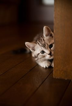 Little sweet kitty playing ''Hide and Seek''