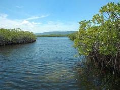 manglares morrocoy